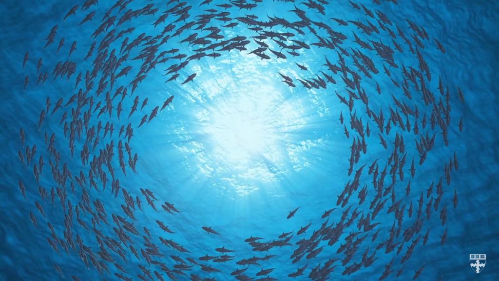 fish sychronized behavior