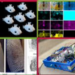 raspberry pi multiple camera projects ardudcam multi camera adapter